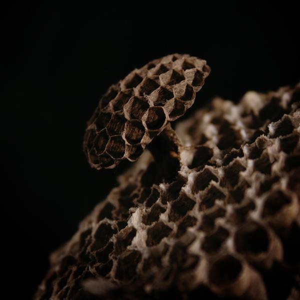 Hornets' Nest Detail